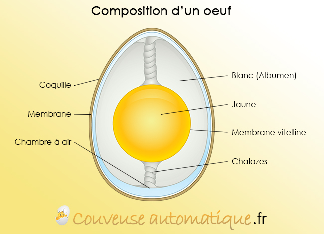 composition oeuf